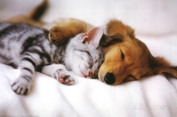 cuddles-sleeping-puppy-and-kitten-art-poster-print