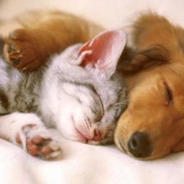 cuddling-dog-cat